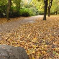 Humboldthain a la tardor